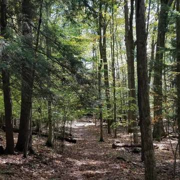 Top story 33f167895b885d3e4d83 trail in hte fall