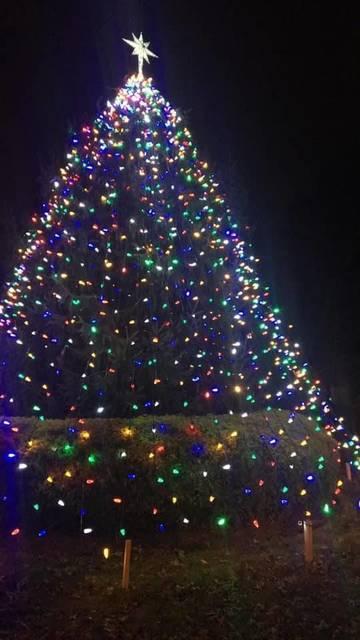 Top story 5a9081b183654e722dcf tree