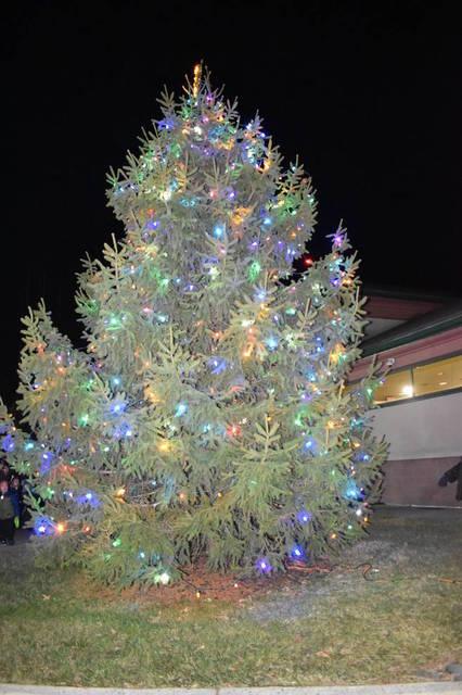 Top story 709843f6279a4606f2b7 tree