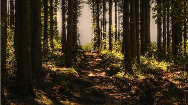 Top story d258d150c5e7bf8b243e trees 3410846 1920