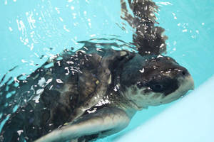 Carousel image 31b9bc0554c2797051ed turtle two