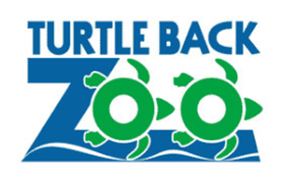 Top story 0e76534bd9c3a6b35de7 turtle back zoo