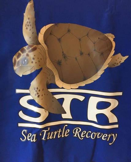 Top story 1e7bfc6b93eec9ee3747 turtle