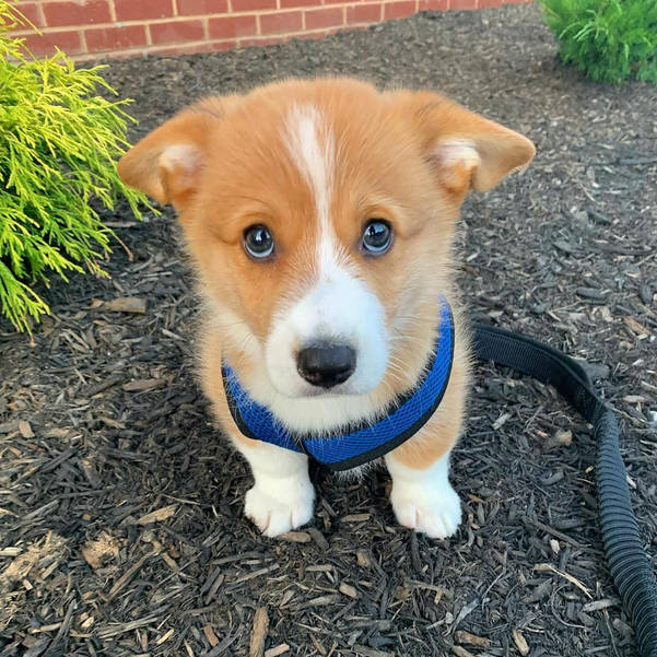 """""""Cutest Pet Ever Photo Contest"""" Announced Today: Fair Lawn Library"""
