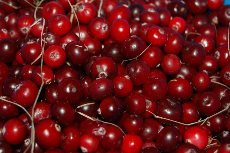 USA-cranberries-1714174_1920.jpg