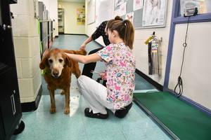 Carousel image 1432482e8f257e9b3a6c veterinary school