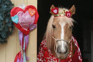 Carousel image 2353e7a37869fe616125 velvet 1 9 21 valentine shoot01