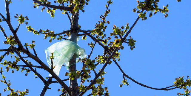 Top story 758f09c709248f365d41 very vivid colours fragment bag plastic stuck tree 161795