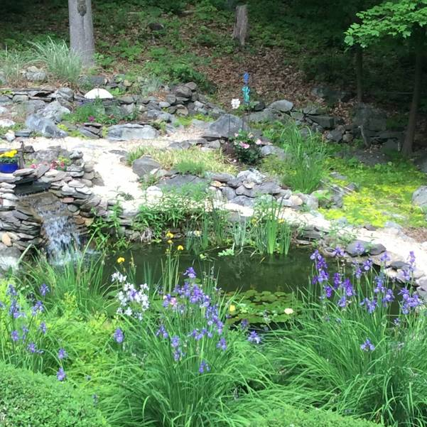 V Great pond shot surrounded by flowers.JPG