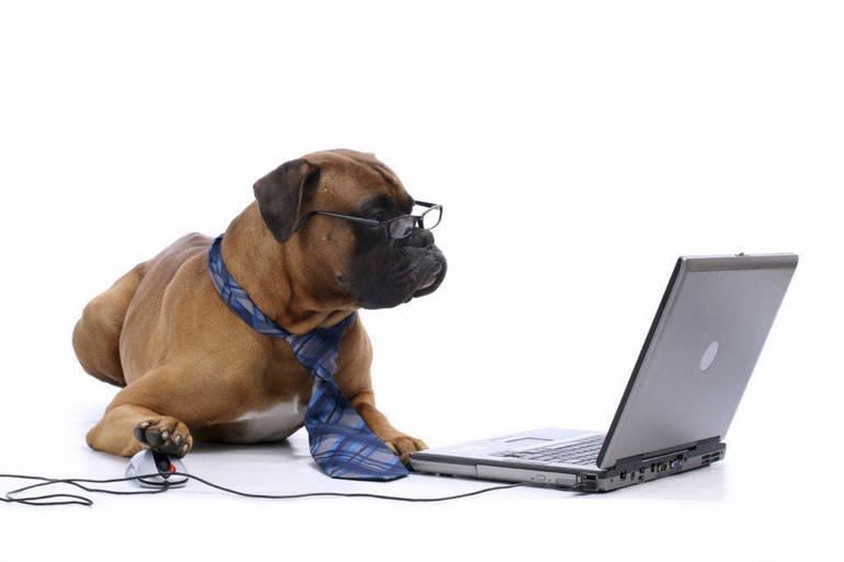Virtual Dog Training.jpg