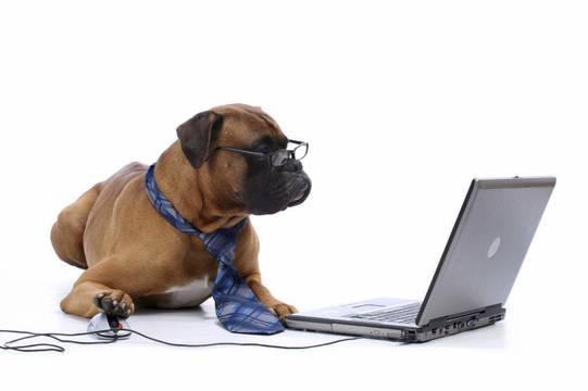 Top story 7914b32fb4c6d6110804 virtual dog training