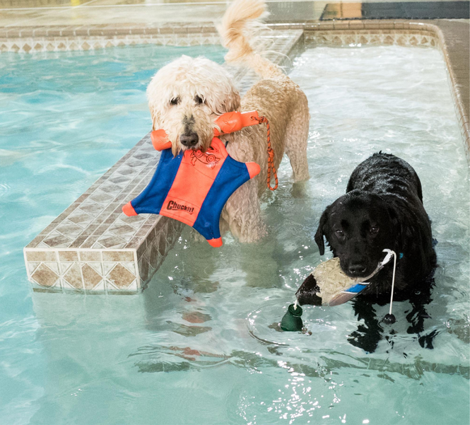 water-dogs.png