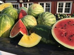 Carousel_image_e8fb803dc49e67924ad9_watermelon-red-600x450