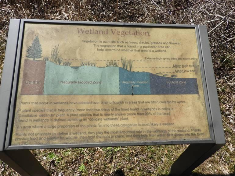 Wetland Vegetation Poster.jpg