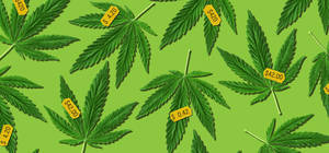 Carousel_image_034fc4bd782979965319_weed-prices