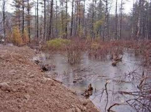 Top story 5061d2fc0873b0646f50 wetlands