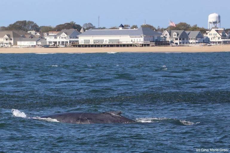whalesginagreer-7.jpg