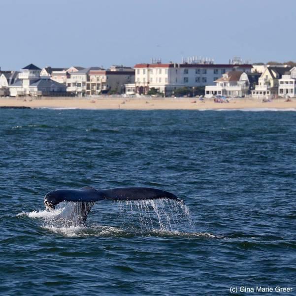 whalesginagreer-6.jpg