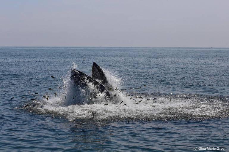 whalesginagreer.jpg
