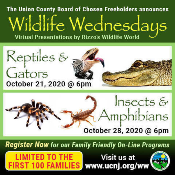 Wildlife Wednesdays Programs For 2020