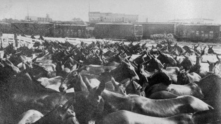 world war horses2.jpg