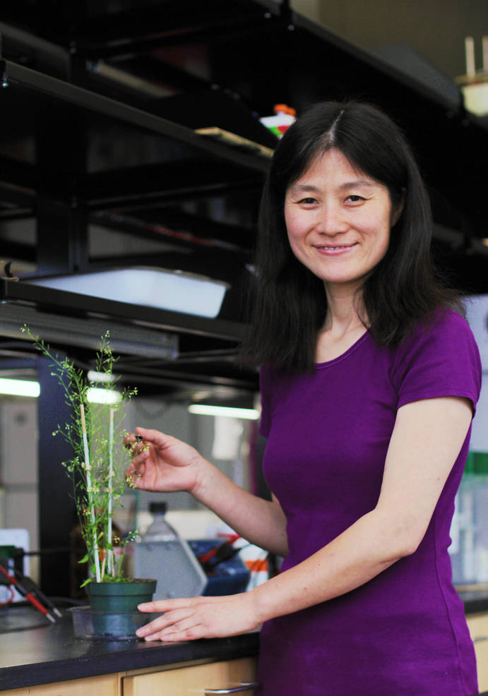 Xiaoning Zhang pictured with the Arabidopsis plant_print.jpg