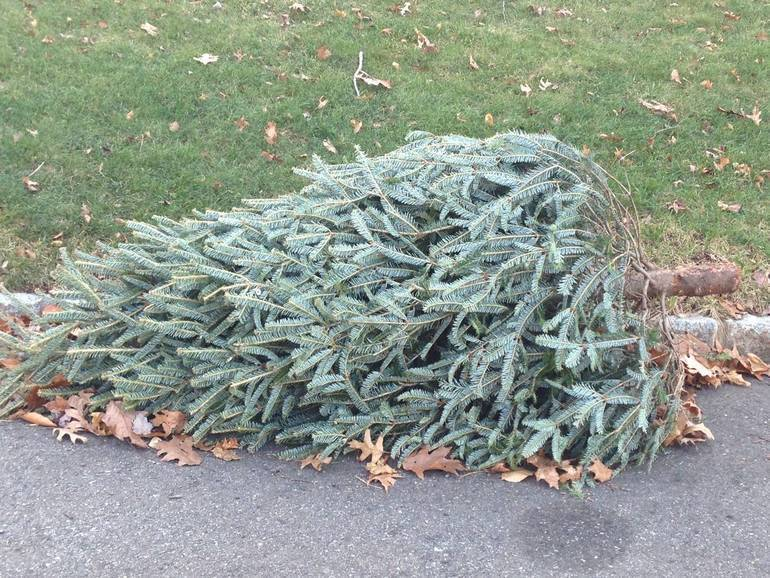 christmas tree for pickup