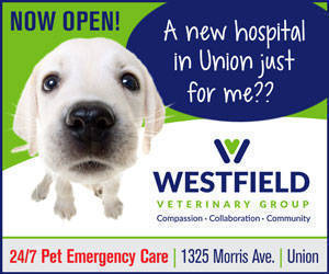 Westfield Veterinary Group Union Nj Directory Tapinto