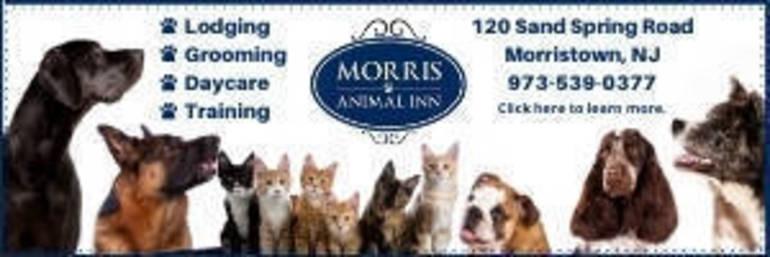 Morris Animal Inn Ad - Montville TapInto.jpg