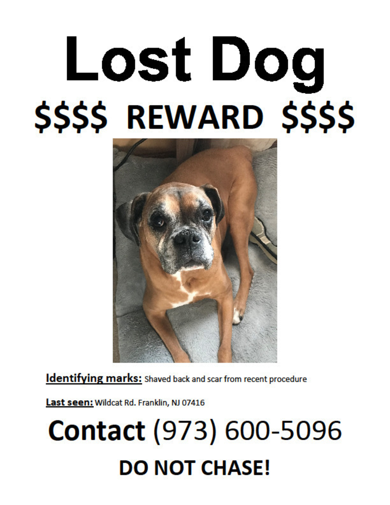 Bailey missing.png