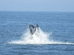 Whale Learn About Whale Watching Tours on Seastreak - Presented by Red Bank's Navesink Maritime Heritage Association