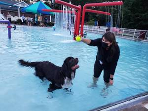 Dogs (and their Humans) Enjoy End-of-Summer Hoorah at Glen Rock Pool