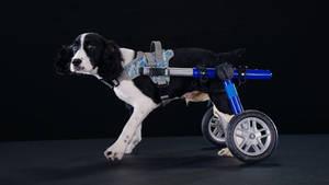 Carousel image 9c9b3b61b9e4eedfa9f9 1d98c1477c20edb8d825 fc73e6102cf2c752cae6 7 nmadd underdogcast cricket wheelchair