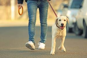 Walking dog on leash