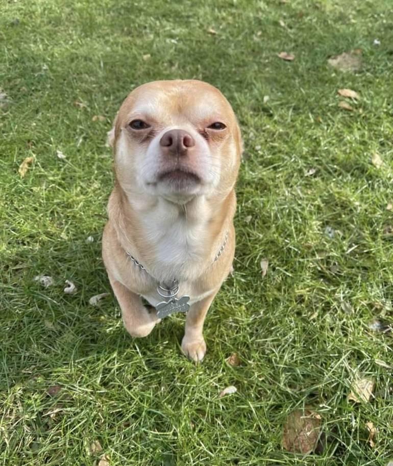 Prancer: The Best Pet Adoption Request Ever?