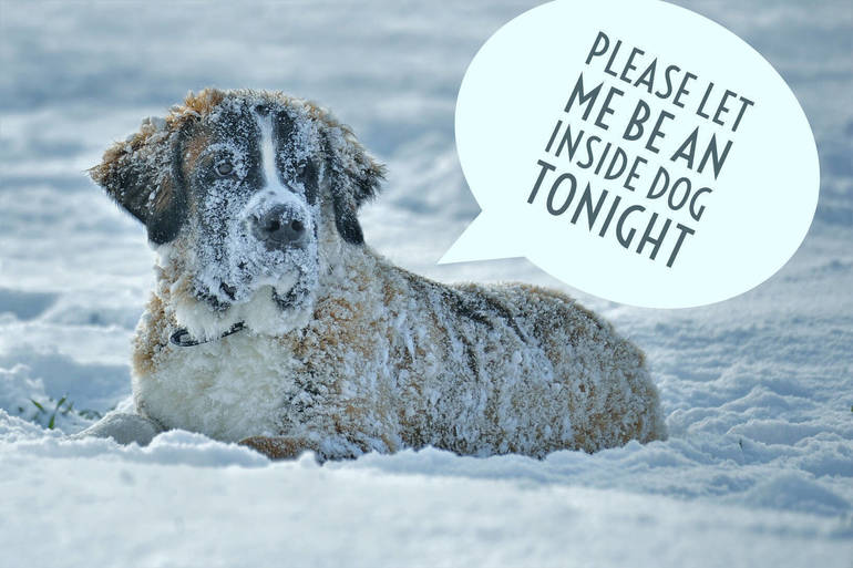 Reminder- NJ State Law Says Pets Must Have Proper Shelter in Freezing Temperatures