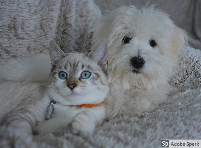 Make Your Dog and Cat Legal: Madison Pet Licenses are Due January 31