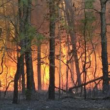 Carousel image 68fd1d36594e7b0fd536 c0f970d770ff472814fe ad4be2d5 dd44 4f1e bcf9 693b421b9911 forest fire2