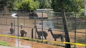 Johnson Park Zoo to Close in Wake of Hurricane Ida Flooding