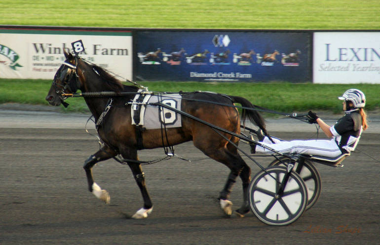 Amateur Drivers Love The Thrill Of Harness Racing