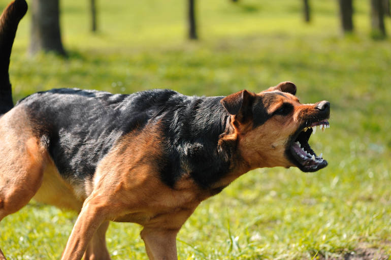 Benson Backed Animal Fighting Bill Signed by Governor Murphy