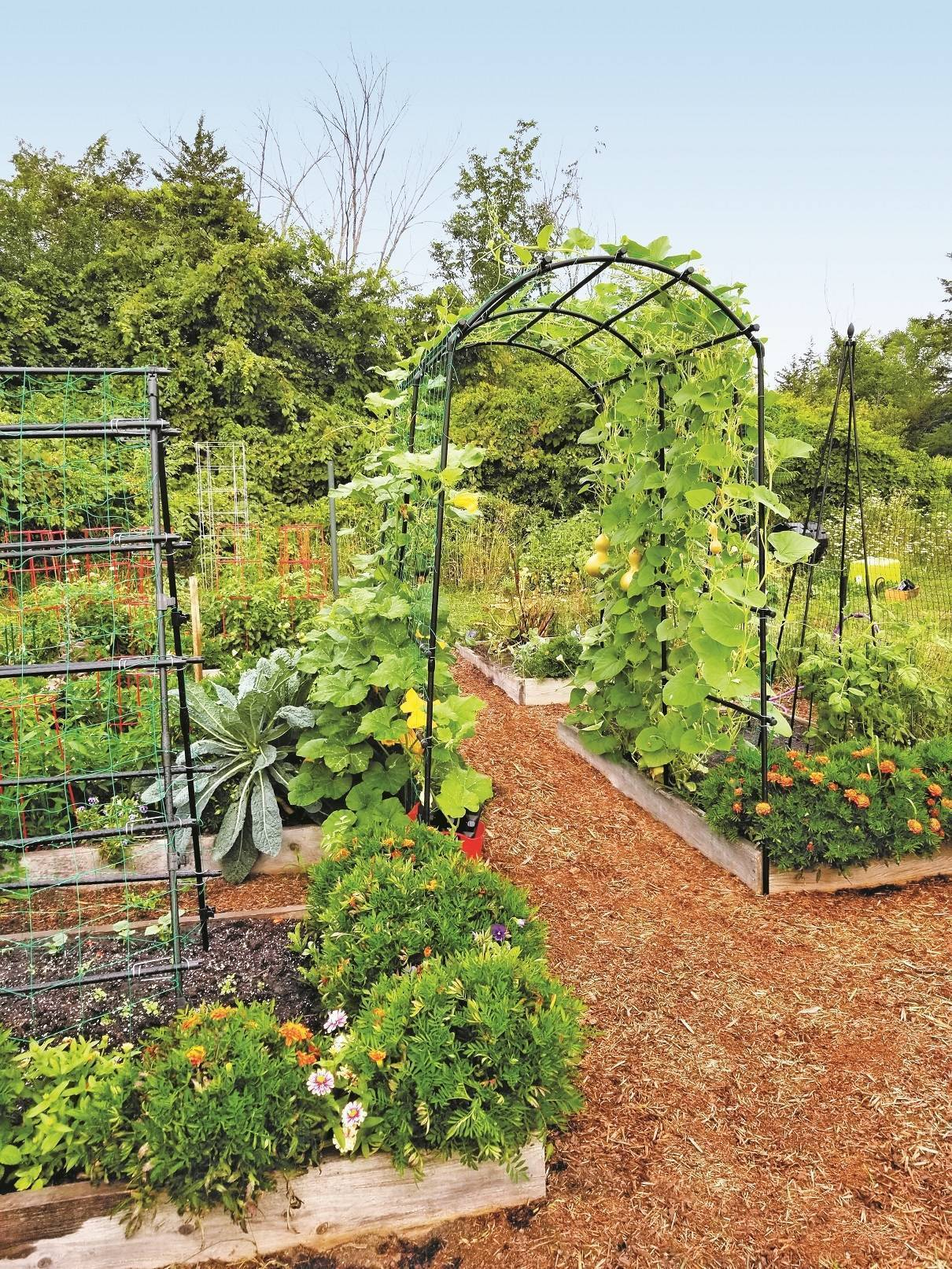 Arbors can provide a beautiful framework and vertical gardening space for pole beans, melons, or squash in food gardens or serve as a support to climbing roses and flowering vines in garden beds.