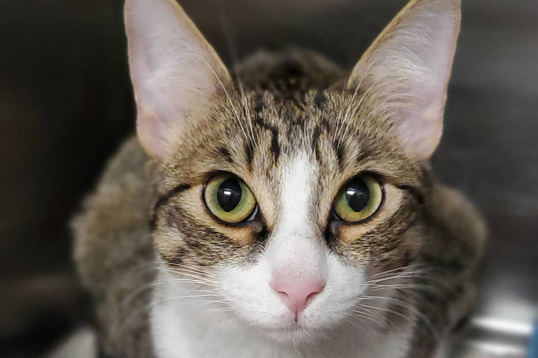 Mt. Pleasant Animal Shelter: Adopt Locally, No Need for Pet Nannies