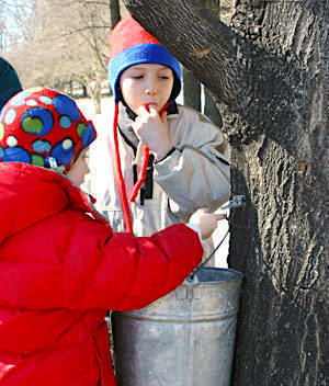 Summit Arboretum's 'Maple Sugaring Fest' on Tap Feb. 28