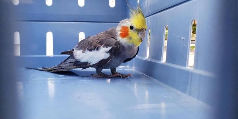 Bird 2019 Aug 24 Joerg Nutley.jpg