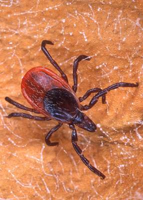 Reminder: Prevent Tick-Borne Diseases While Enjoying the Outdoors