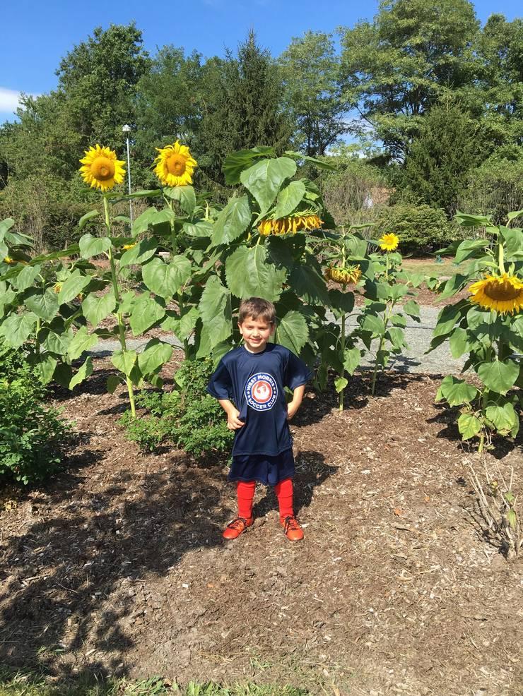 Brayden Sunflower.jpg