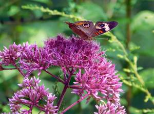Community Science Project Invites Union County Residents to Document Biodiversity of Rain Gardens