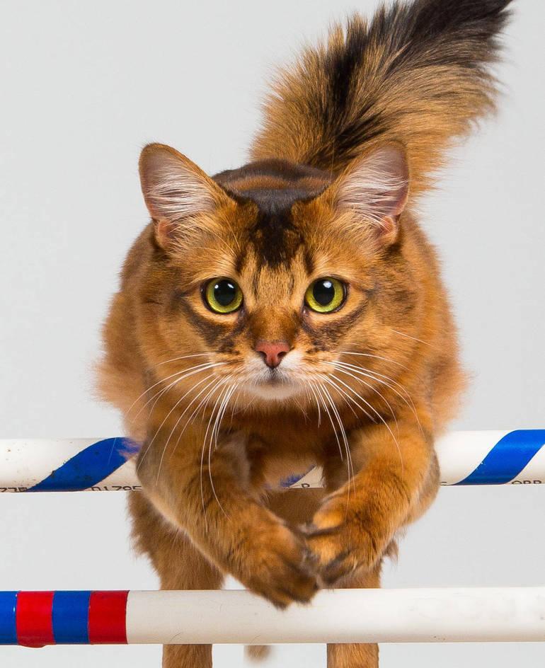 Cat Show 2.jpg