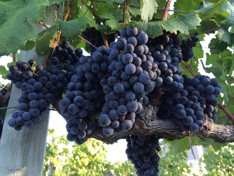 winegrowing winemaking winery wineries new jersey